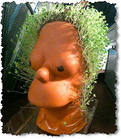 homer simpson chia pet